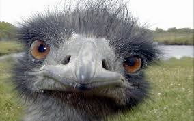 The ostrich is not amused